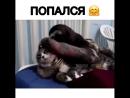 Кот попал в лапы ленивца🤗