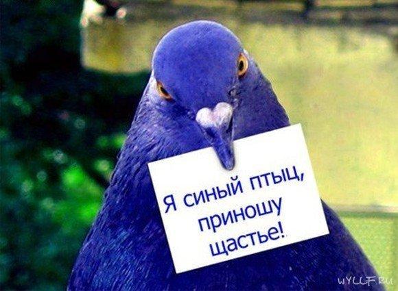 Никита Фомин, Печенга - фото №9