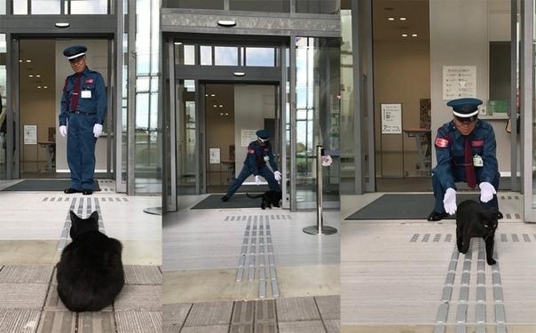 В Японии два кота уже два года пытаются зайти в музей, но им мешает охранник. За войной следят тысячи людей в Твиттере. Пока коты проигрывают в этом противостоянии, но не сдаются. В префектуре
