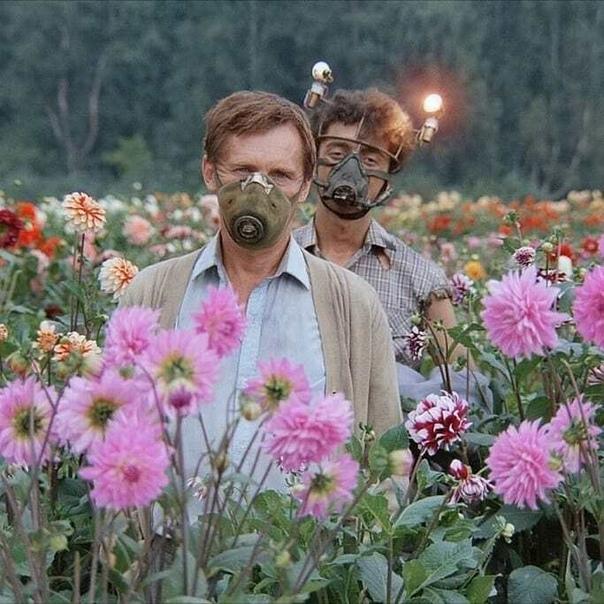 Кадр из фильма «Кин-дза-дза!»«Правительство на другой планете живет, родной»