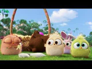 Angry birds 2 в кино - поздравление