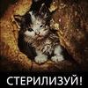 Дворовый Кот