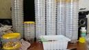 Уникальный способ посадки деток гладиолуса Посадка в контейнеры от яиц...