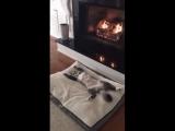 video (1)