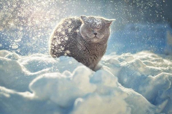 Я просто оставлю это здесь: Кот и снегопад :)
