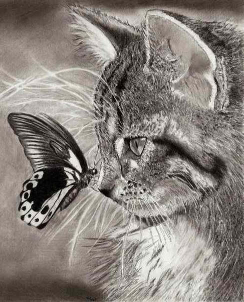 Кошечки..Кошарики)) - Страница 4 VTMy2-ggdgs