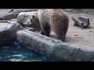 Когда животные спасают других животных (6 sec)