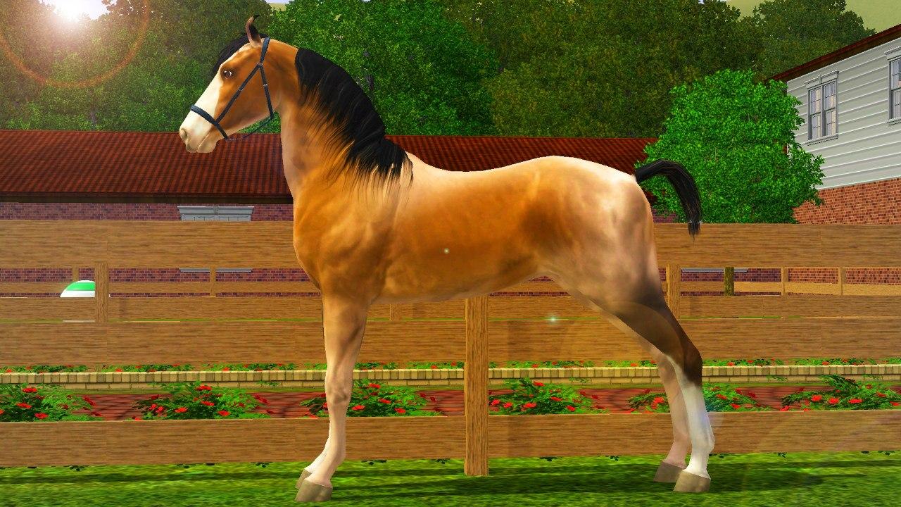 Регистрация лошадей в RHF 1.1 FpaF-owtLHQ