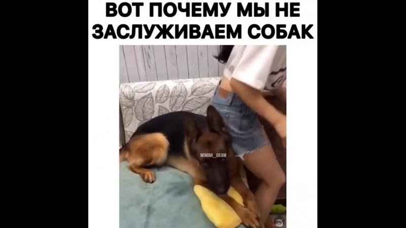 Собаки лучше людей😢