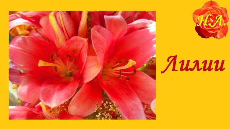 Прекрасные цветы лилии🌺 🌸 Лилии для Лилии