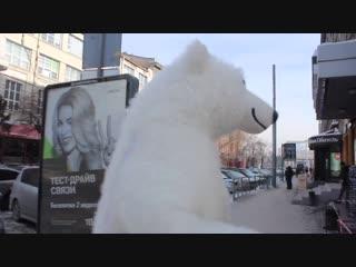 Белый медведь танцует в центре Новосибирска