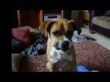 Лучшие смешные моменты с животными / Best funny moments with animals 2013-2014