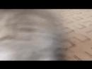 Черепашка в опастности