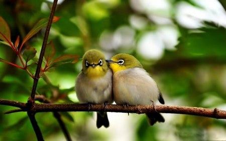 Нежные колыбельные, полные щебетания птиц и других природных звуков.