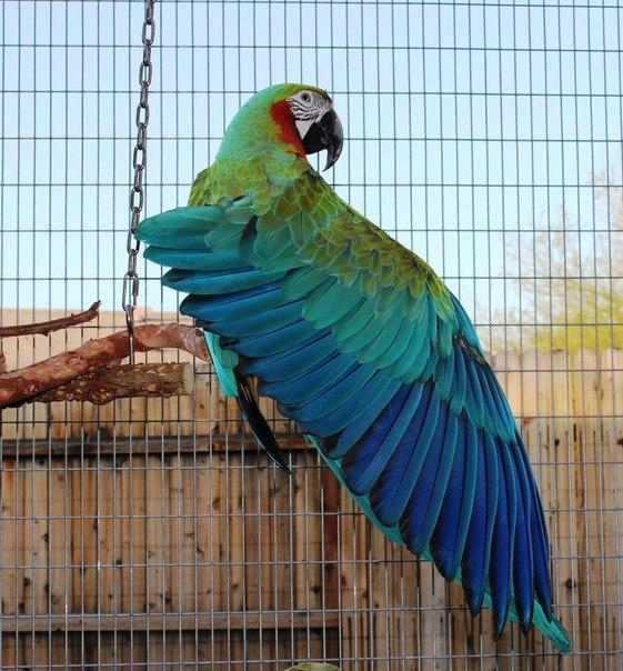 Где можно купить попугай ара
