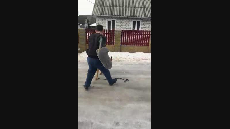 Фролин Аделина 10 месяце студентка на занятиях в г Молодечно учиться охронять кусачка спасибо замечательнуму кинологу Владимир
