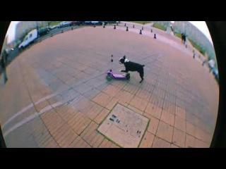 Собаки показывают трюки на скейтборде. Смотреть онлайн - Видео - bigmir)net