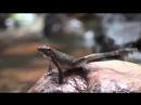 Танцующие лягушки