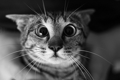Смайлик кот - 9d