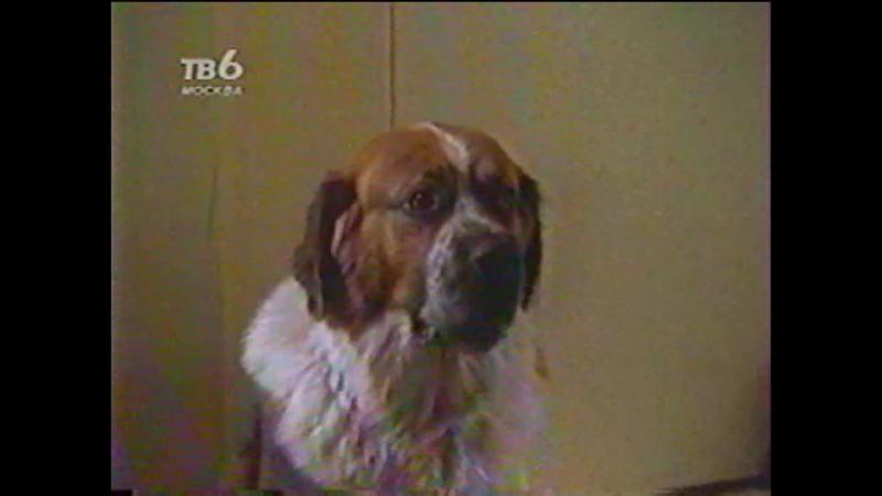 Т/С Дом собаки 11 серия (1990г)