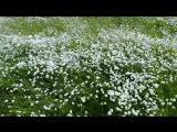 Ветер и трава.