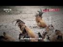 Новогодний День ''Юаньдань'' (часть 02). Новый вкус ''Синь Вэйдао'' Старого города ''Лао Чэн'' - город Хэчжоу, с его таинственны
