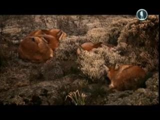 Жизнь на планете Земля. Хищники и их жертвы
