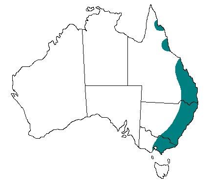 Ареал обитания: широко распространена вдоль восточного побережья, от Виктории на юге до полуострова Кейп Йорк на севере.