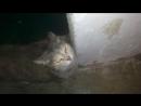 Кошка захотела домой Светящийся глаза