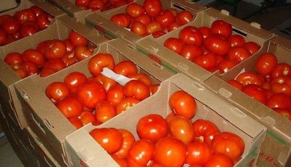 Как сохранять томаты