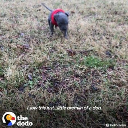 Маленький щенок был выброшен и искал маму, но тут ему попалась собачка, которая потеряла своих щенков. <3