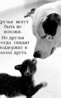 Андрей Пьянков, 9 ноября , Краснознаменск, id179098712