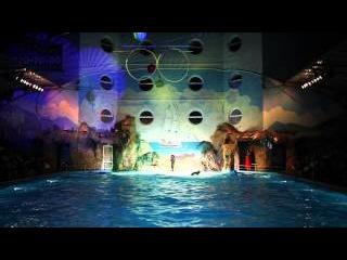 Романтическое ночное шоу в Одесском дельфинарии НЕМО