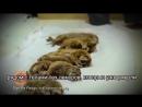 Лемуры Лори – НЕ домашние животные