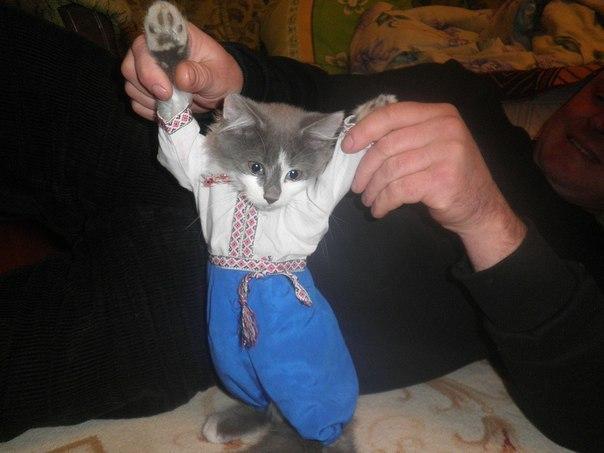 Кіт козак