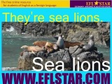 Children's Vocabulary Lab - Fish and Ocean Mammals