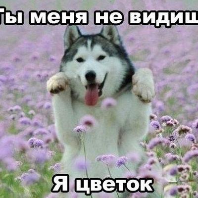 Маша Казанцева, 21 июля , Калининград, id229415861