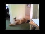Собаки спят а мы смеемся