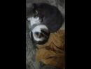 кошачий интим