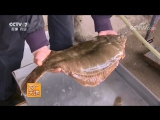 鲆鲽鳎是亲兄弟吗。