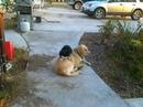 Это не моя собака, не моя кошка, но они приходят в мой дом и сидят, как это каждый день…
