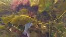 Фридайвинг в Баренцевом море