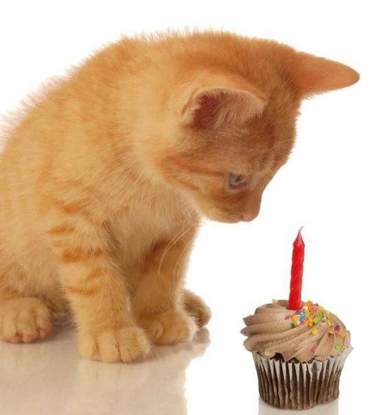 День рождения поздравления кирилл
