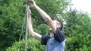 Выращивание огурцов в бочке. Шпалера для огурцов.