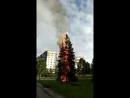 Возле бывшего ЗАГСа горит ель