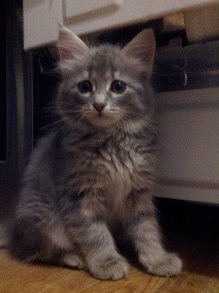 Ребята , потеряла серого котенка в общежитии, если кто-нибудь видел ил