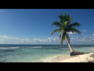 Tropical Beach with Blue Sky White Sand and Palm (relaxation)