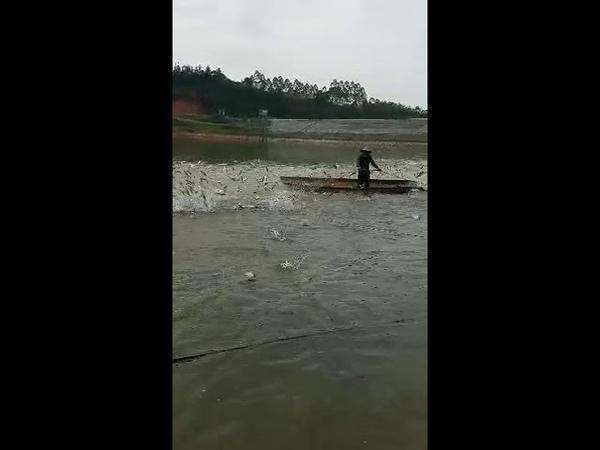 Как ловят рыбу в Китае