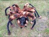 Гигантский паук атакует жителей Варшавы
