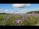Полевые цветы 9224